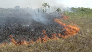Pesquisadores usam dados de radar para mensurar o impacto do fogo na Amazônia