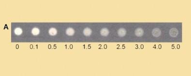 Método utiliza nanopartículas de prata em sensor de papel cromatográfico para determinar quantidade de ácido ascórbico em amostras